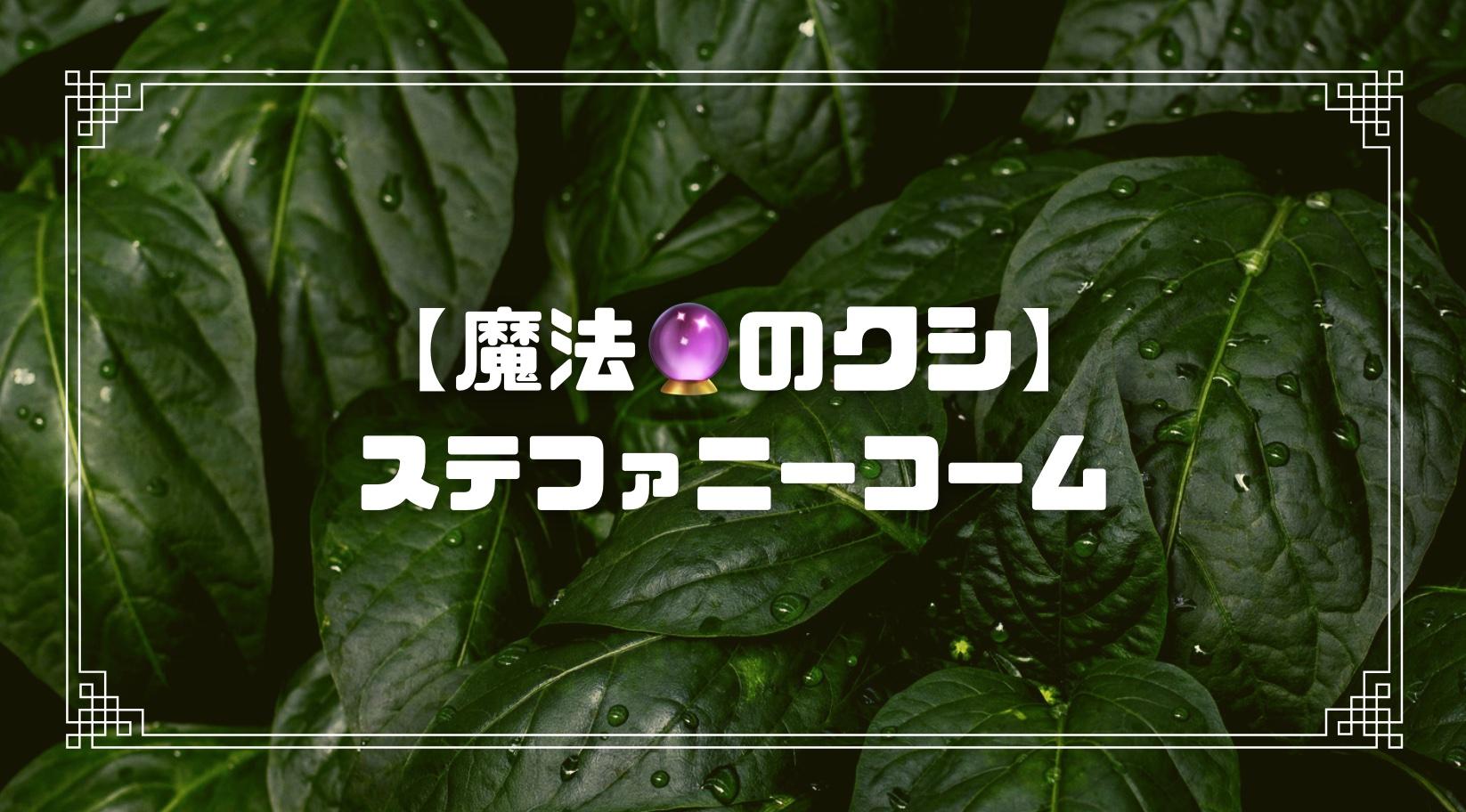 日本で最も高級なヘアコーム【ステファニーコーム】を徹底検証!