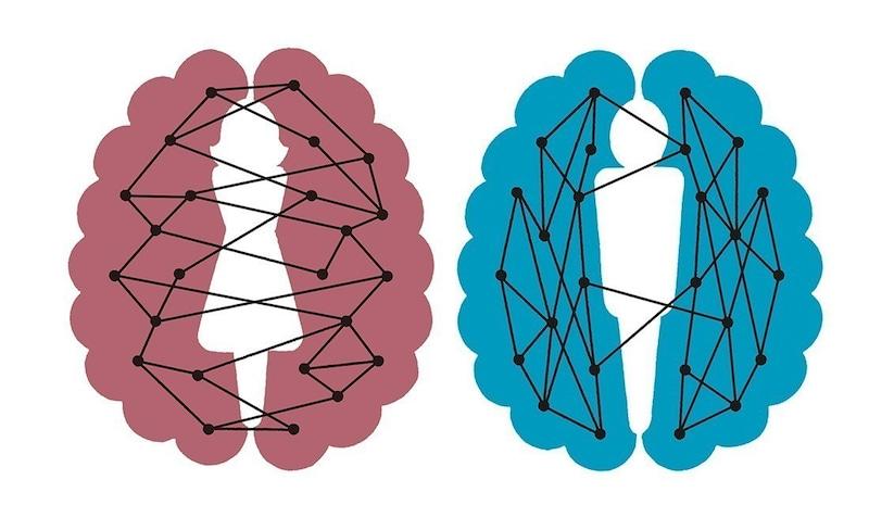ペンシルバニア大学の研究グループが作った頭頂部から見た時の大脳のイラスト