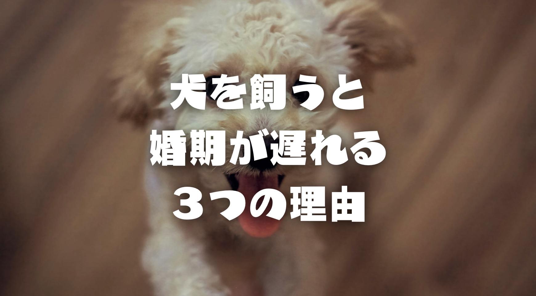 婚活女子必見|犬を飼うと婚期が遅れる3つの理由