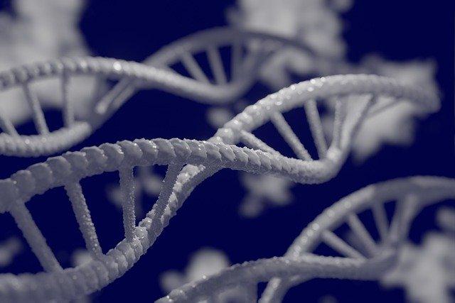 遺伝子の写真