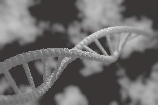 遺伝子DNAの写真