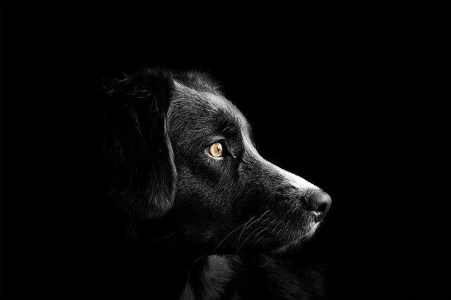 ブラックな犬