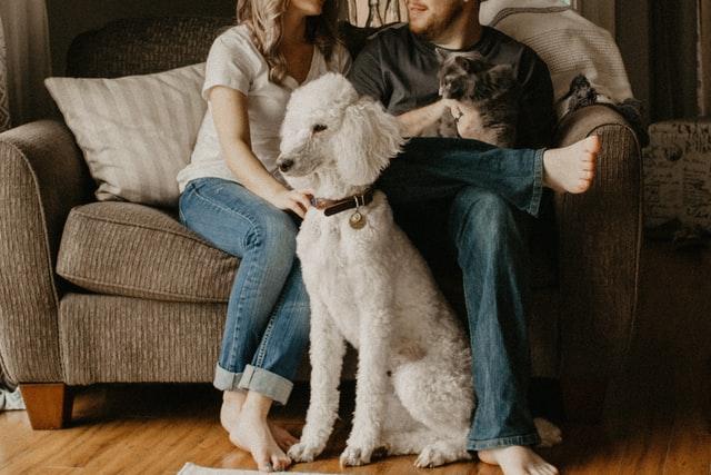 ソファーに座るカップルとペット